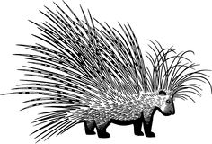 Cape Porcupine. Illustration of a cape porcupine Royalty Free Stock Photo