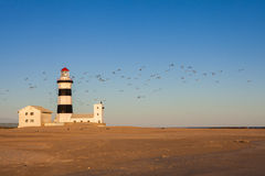 Cape Recife Lighthouse. The Cape Recife Lighthouse just before sunset with a flock of birds passing Stock Photography