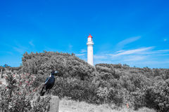 Cape Schanck Lighthouse Royalty Free Stock Photo