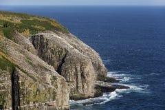Cape St. Mary's bird colony Royalty Free Stock Photo