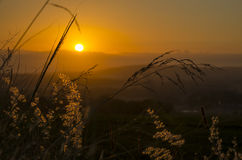 Cape Sunset. Sunset in Somerset West, South Africa, with various grasses stock images
