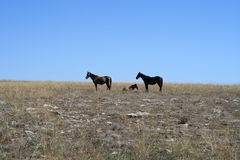 Cape Tarkhankut and horses Stock Photography