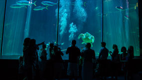 Cape Town Aquarium Royalty Free Stock Photography