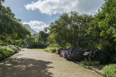 Cape town botanic garden Royalty Free Stock Images