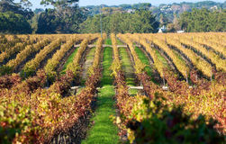 Cape Town Constantia vineyards Stock Images
