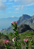 Cape Town Floral Kingdom. View from Cape Town's Silvermine Nature reserve towards False Bay coastline Stock Image