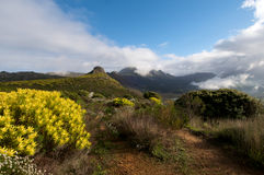 Cape Town Nature Royalty Free Stock Photos