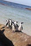 Cape Town - pinguin - plage de Bolders Photos stock