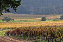 Cape Town Vineyards Stock Photos