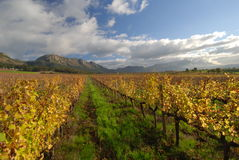 Cape town wine view. Early winter sets in over Cape Town vineyards Stock Image