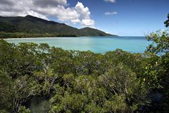 Cape Tribulation Royalty Free Stock Photos
