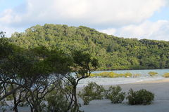Cape Tribulation Stock Image