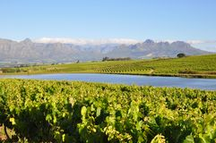 Stellenbosch mountains and vineyards Royalty Free Stock Photos