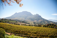 Cape Wine Lands Stock Image