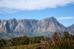 Cape Wine Lands stock photos