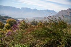 Cape Wine Lands Stock Photo