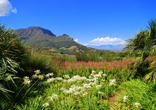 Cape winelands in Africa. Glorious blue sky over the Cape Winelands in Franschoek in Africa Royalty Free Stock Images