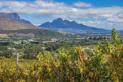 Cape Winelands. The Cape Winelands region is the premier wine producing area of South Africa Stock Photography