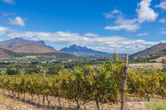 Cape Winelands. The Cape Winelands region is the premier wine producing area of South Africa Stock Image