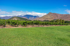 Cape Winelands Royalty Free Stock Photography