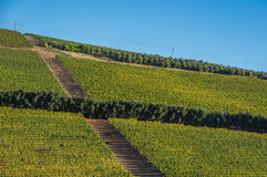Cape Winelands. The Cape Winelands region is the premier wine producing area of South Africa Royalty Free Stock Images