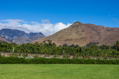 Cape Winelands. The Cape Winelands region is the premier wine producing area of South Africa Royalty Free Stock Photography