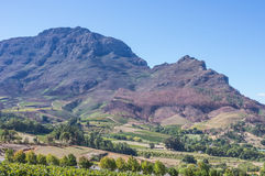 Cape Winelands. The Cape Winelands region is the premier wine producing area of South Africa Royalty Free Stock Image