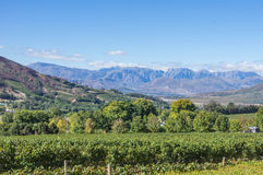 Cape Winelands. The Cape Winelands region is the premier wine producing area of South Africa Royalty Free Stock Photos