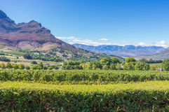 Cape Winelands. The Cape Winelands region is the premier wine producing area of South Africa Royalty Free Stock Photo