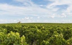 Capela em Saint-Estephe verde do vinyard Fotografia de Stock