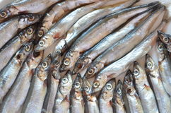 Capelin Royalty Free Stock Image