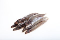 Capelin Stock Images