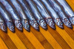 Capelin Royalty Free Stock Photo