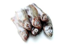 Capelin fish isolated Royalty Free Stock Images