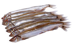 Capelin fish Royalty Free Stock Photos