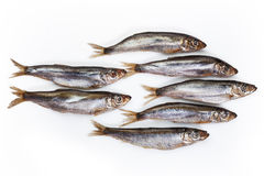 Capelin Stock Image