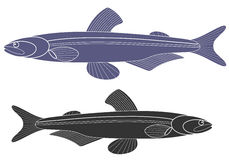 Capelin Royalty Free Stock Images