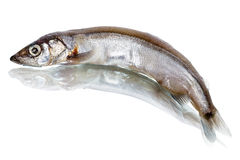 Capelin on white Royalty Free Stock Photos