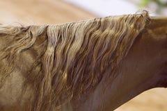 Capelli del cavallo Immagine Stock Libera da Diritti