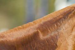 Capelli del collo del cavallo Immagine Stock Libera da Diritti