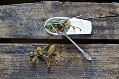 Caperberries com pratas velha Fotografia de Stock