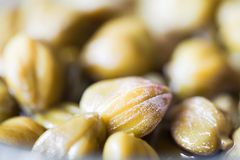 Free Capers Stock Photography - 23639712