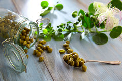 Capers pickled with plant and caper plant flower Stock Photos