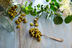 Capers pickled with plant and caper plant flower Royalty Free Stock Images