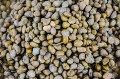 Capers in vinegar Royalty Free Stock Photography