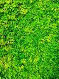 Capet dell'erba fotografia stock