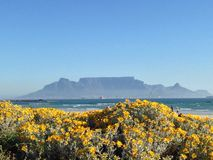 Capetown in bloom Royalty Free Stock Image
