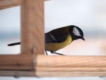 Capezzolo con piume gialle che si siedono al piccolo volo dell'alimentatore di legno Immagini Stock Libere da Diritti