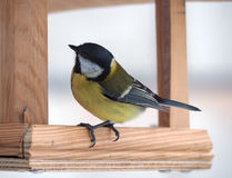 Capezzolo con piume gialle che si siedono all'alimentatore di legno ed al pensiero Fotografie Stock