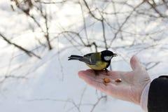Capezzolo nel parco di primavera immagini stock libere da diritti
